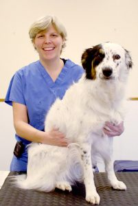 Board Certified Orthopedic Surgeons For Dogs
